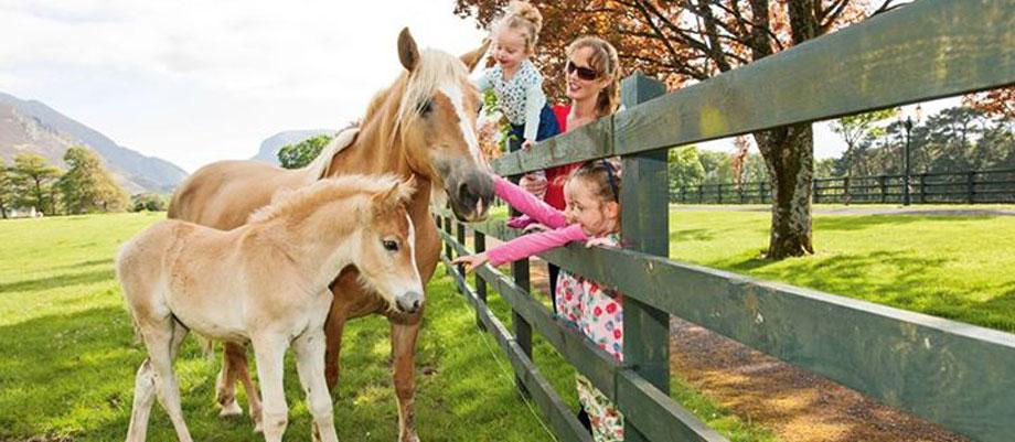 Familienurlaub Irland