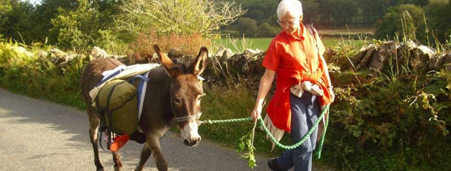 Wandern mit einem Esel