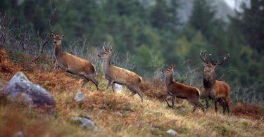Irische Wildtiere und Vogelarten