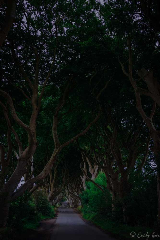Dark Hedges, Die 6 schönsten Orte im Norden Irlands