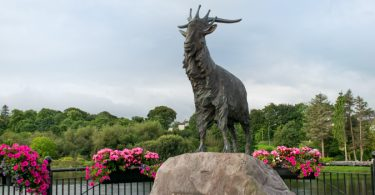 King Puck, Killorglin