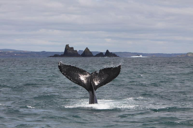 Whale Watching in irland