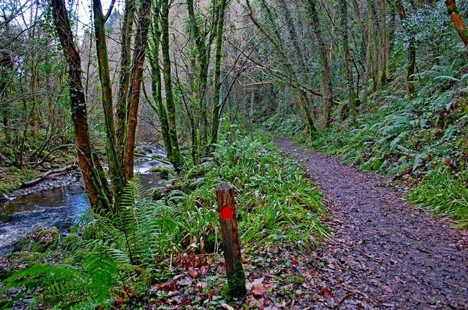 Wanderweg Devil's Glen Wicklow Irland