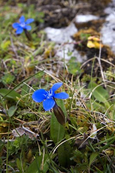 Blumen The Burren