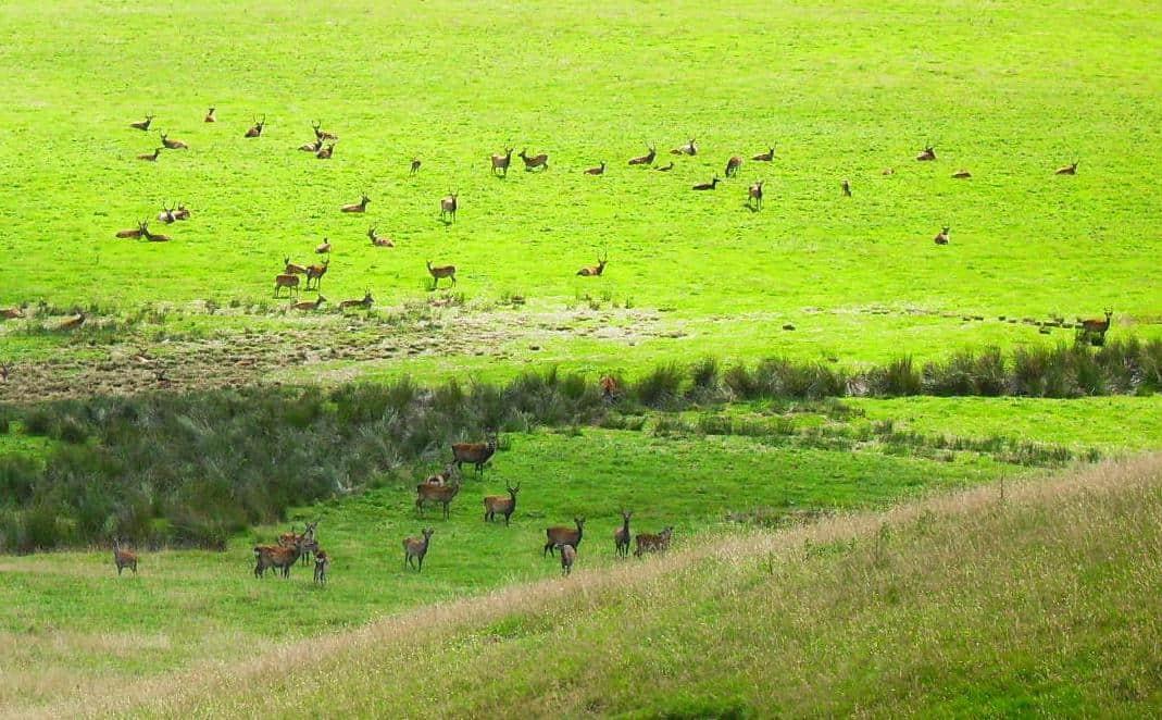 Wildherde Wicklow Mountains Nationalpark