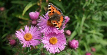 Birr Castle Garten Blume