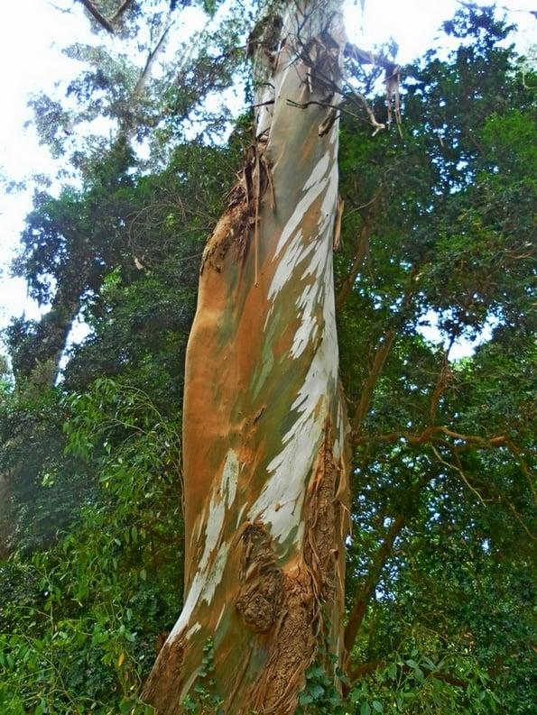 Mount Usher Gardens Wicklow Tree Trail
