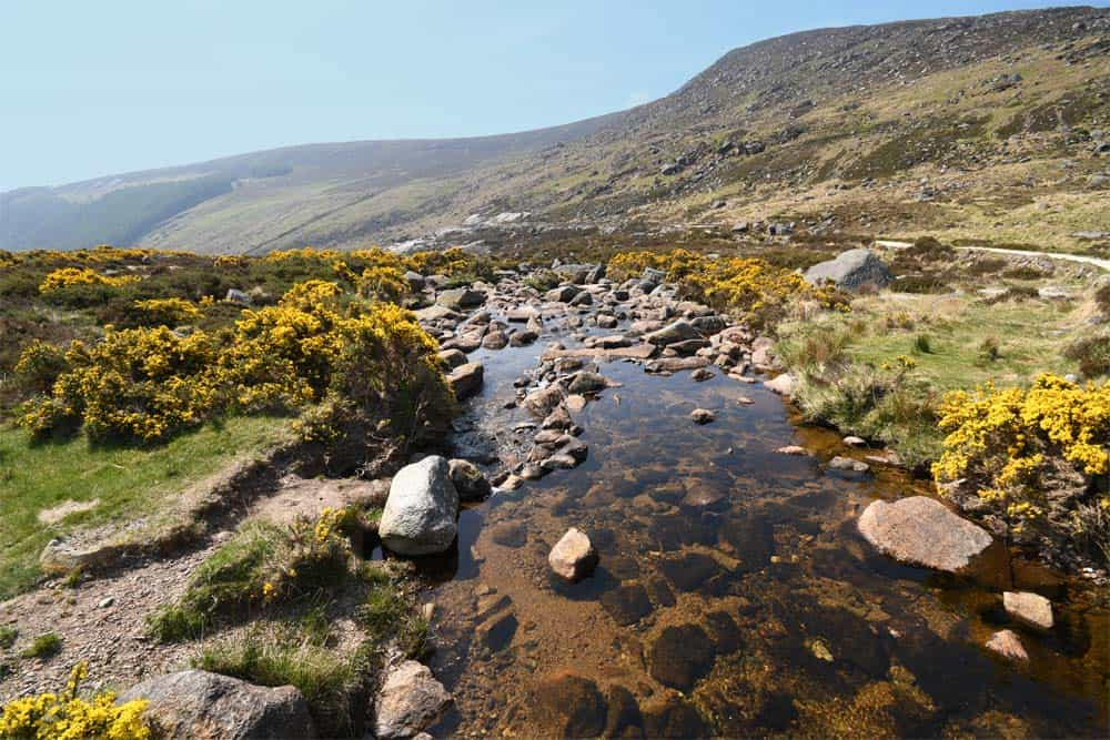 Wicklow Gap, Ginster Irland