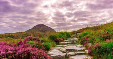 Irlands Pflanzenlandschaft