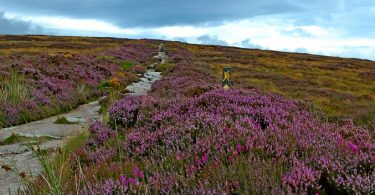 Wicklow Way Wandern Dublin, Irlands Vegetation Mountains