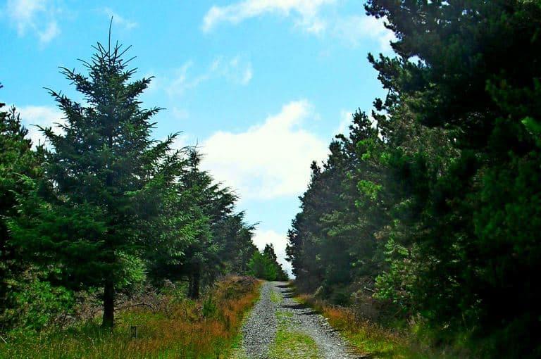 Wicklow Way Wandern Moyne Shillelagh Tinnahely