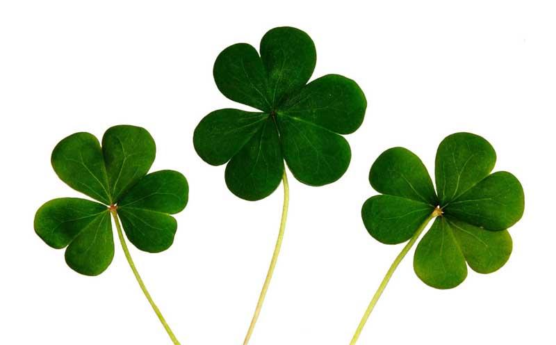 Irlands Kleeblatt Das Irische Nationalsymbol Derirlandshopde