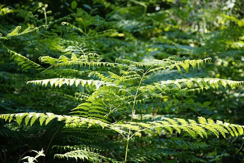 Vegetation in Irland