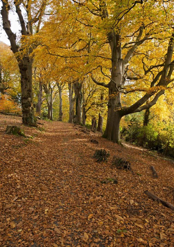 Irland im Herbst