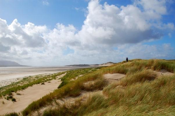 Strandhafer Irland