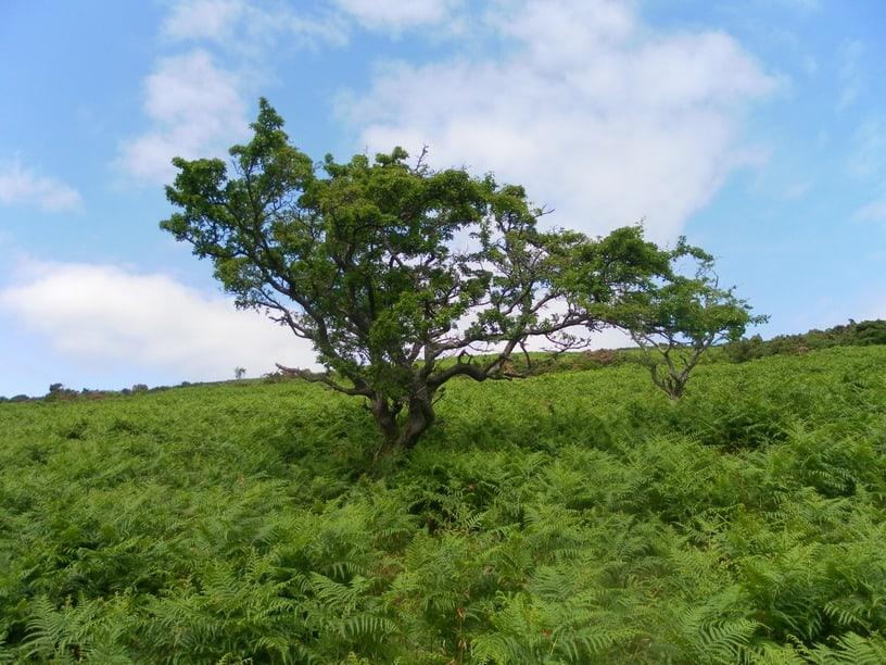 Irlands Vegetation Windy